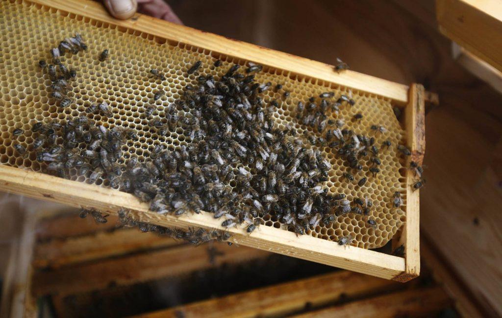 abejas en aire de colmena